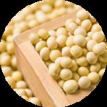 Lecithin 大豆イソフラボン
