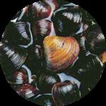 Ornithine オルニチン