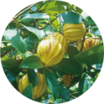 garcinia ガルシニア