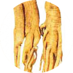 Korean ginseng 高麗人参