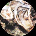 Torula yeast  トルラ酵母