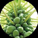 green_papaya 青パパイヤ