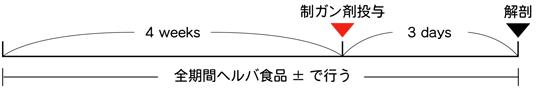 実験期間-図