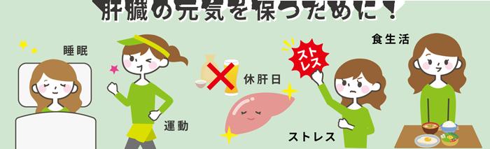 肝臓の元気を保つために